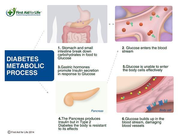 Diabetes-Metabolic-Process