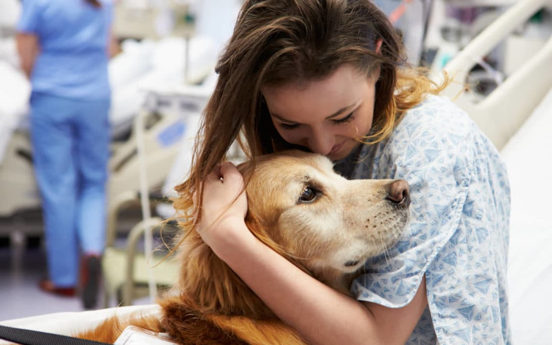 therapy, dog, hospital
