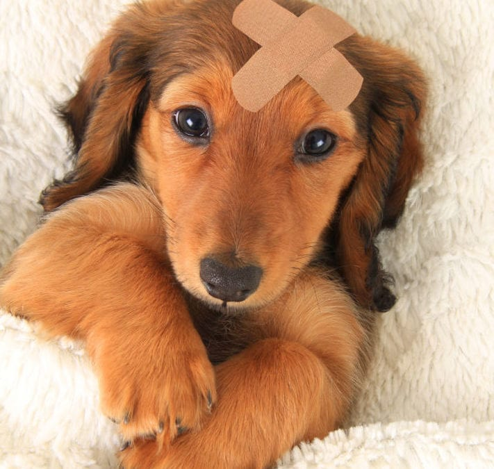 7 First Aid Tips that could save your dog's life